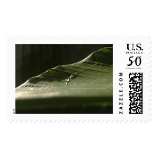 Water Drops on Banana Leaf, Photo 8 Postage Stamp