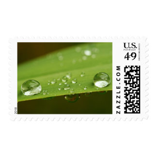 Water Drops On Blade Of Grass, Cape Town Stamp
