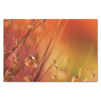 Water Drops on Blades of Grass Colorful Nature Tissue Paper