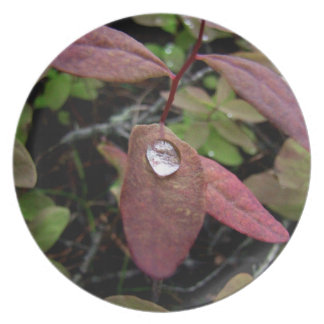 Water Drops on Foliage Party Plates