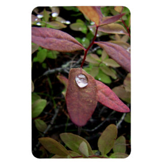 Water Drops on Foliage Rectangular Photo Magnet