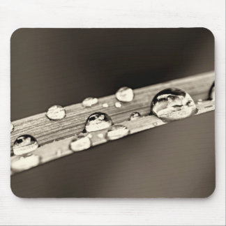 Water drops on grass blade mouse pad