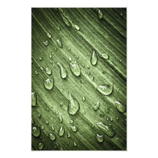 Water drops on green leaf photographic print