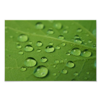Water drops on leaf poster