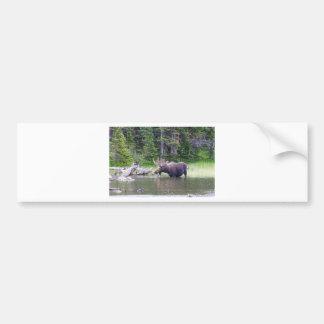 Water Feeding Moose Bumper Sticker
