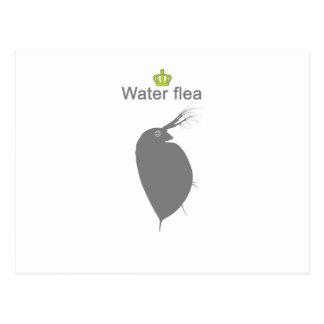 water flea g5 postcard