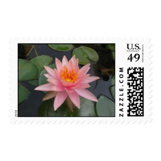 Water Flower Postage Stamps