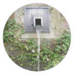 Water fountain plate