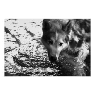 Water Hole Poster