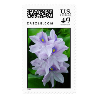 Water Hyacinth Stamp