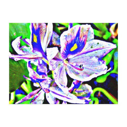 WATER HYACINTHS CANVAS PRINT