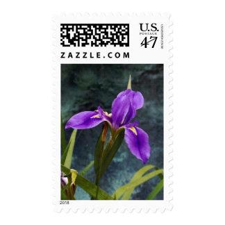 Water Iris Stamp