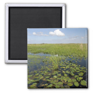 Water lilies and sawgrass in Florida everglades 2 Fridge Magnets