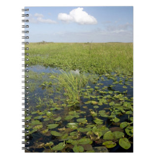 Water lilies and sawgrass in Florida everglades 2 Note Books