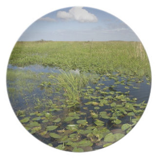 Water lilies and sawgrass in Florida everglades 2 Plate