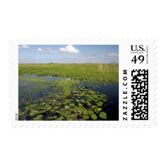 Water lilies and sawgrass in Florida everglades 2 Postage Stamp