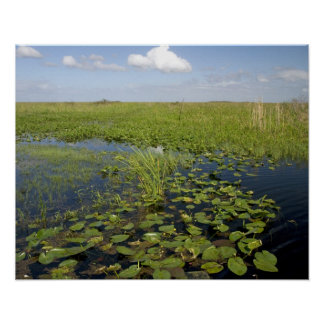 Water lilies and sawgrass in Florida everglades 2 Poster