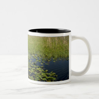Water lilies and sawgrass in Florida everglades 2 Two-Tone Coffee Mug