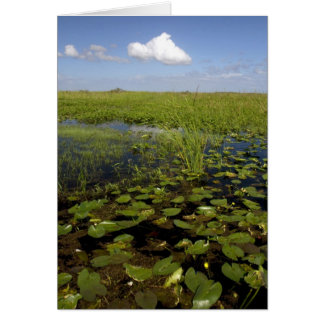 Water lilies and sawgrass in Florida everglades Greeting Card
