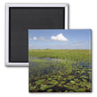 Water lilies and sawgrass in Florida everglades Fridge Magnet