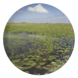 Water lilies and sawgrass in Florida everglades Dinner Plates