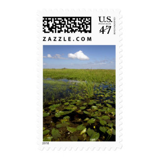 Water lilies and sawgrass in Florida everglades Postage