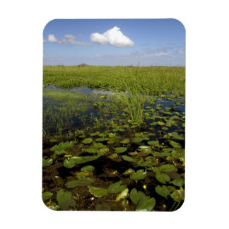 Water lilies and sawgrass in Florida everglades Magnet