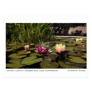 Water Lilies at Mission San Juan Capistrano Postcard