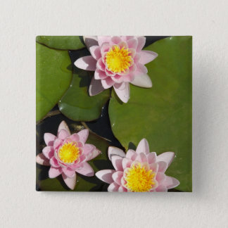 Water lilies button