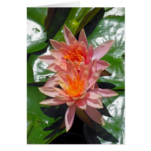 Water Lilies Card