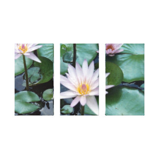 Water Lilies II Gallery Wrapped Canvas Print