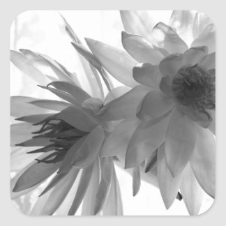 Water Lilies in Monochrome Square Sticker