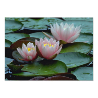 Water Lilies In Pink Card