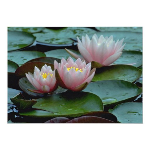 Water Lilies In Pink Custom Invitations