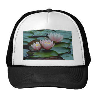 Water Lilies In Pink Mesh Hat
