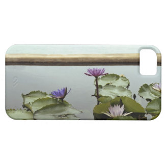 Water lilies in pond by ocean iPhone SE/5/5s case