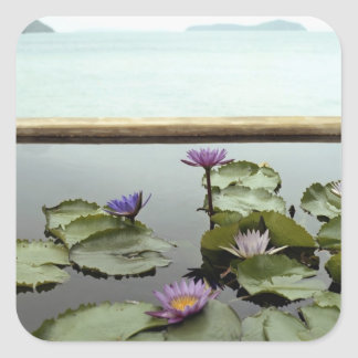 Water lilies in pond by ocean square stickers