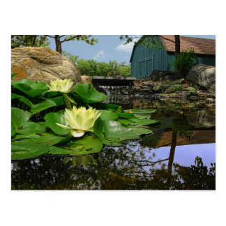 Water Lilies in Pond Postcard