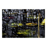 water lilies in swamp poster
