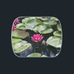 """water lilies jelly belly candy tin<br><div class=""""desc"""">In this photo are beautiful water lilies growing out of a lily pond. Lovely lily pads surround these gorgeous,  colorful flowers.</div>"""