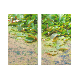 Water Lilies Liliypads Canvas Print