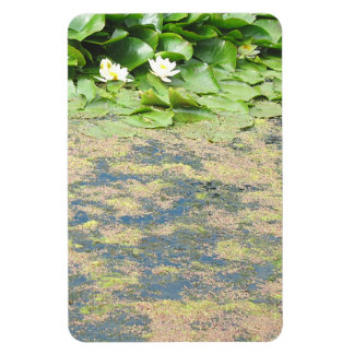 Water Lilies Liliypads Rectangular Photo Magnet