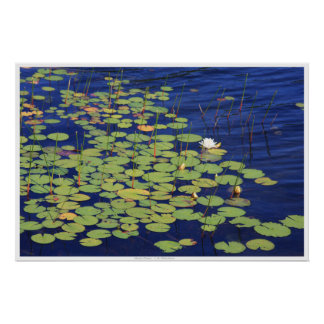 Water Lilies - Monet's Dream Posters