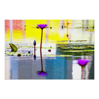 Water Lilies No1 Posters