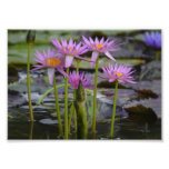 Water Lilies! Photo Print