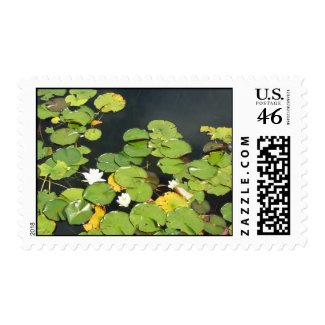 Water lilies stamp