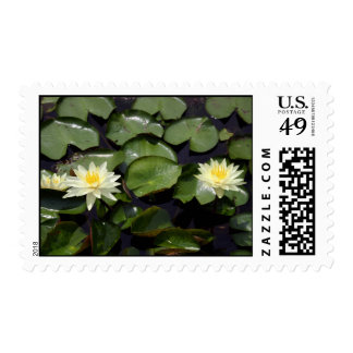Water Lilies Stamps