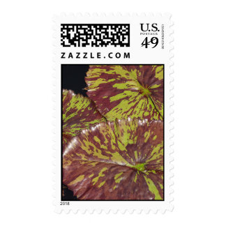 Water Lilies Postage