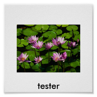 Water lilies, tester poster