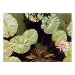 Water Lillies 02 Greeting Cards